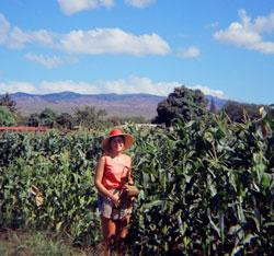 1971-72: Molokai; spent a year working for Molokai Seed (seed corn)