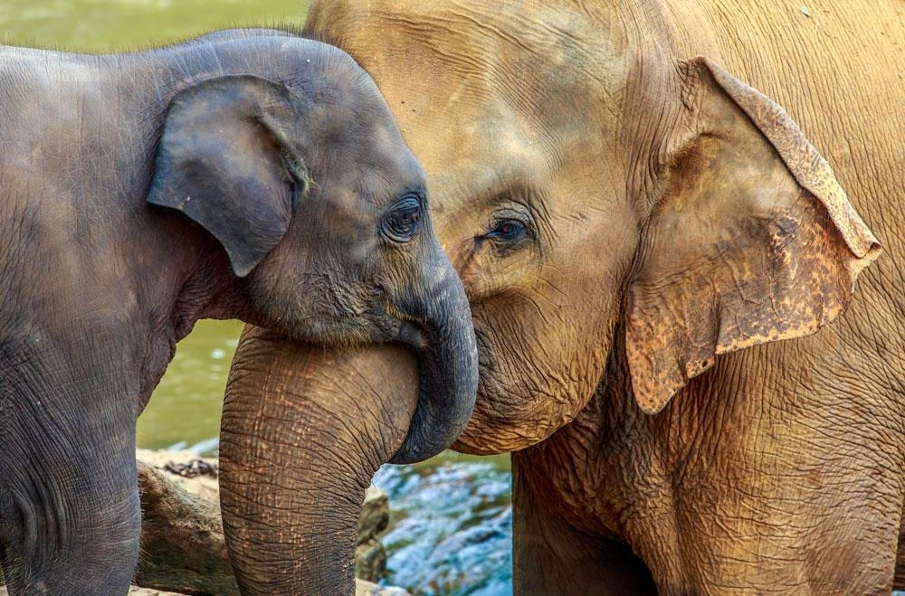 Why are all baby animals so cute?! This baby elephant and his mama are the cutest.