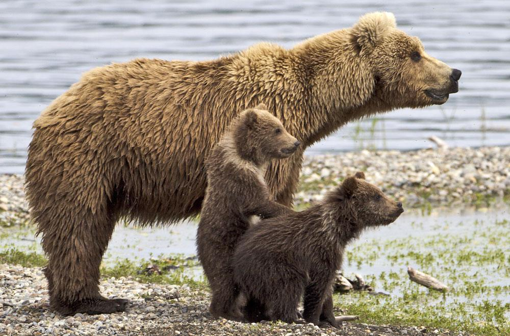 Why are all baby animals so cute?! These baby bears are the cutest.