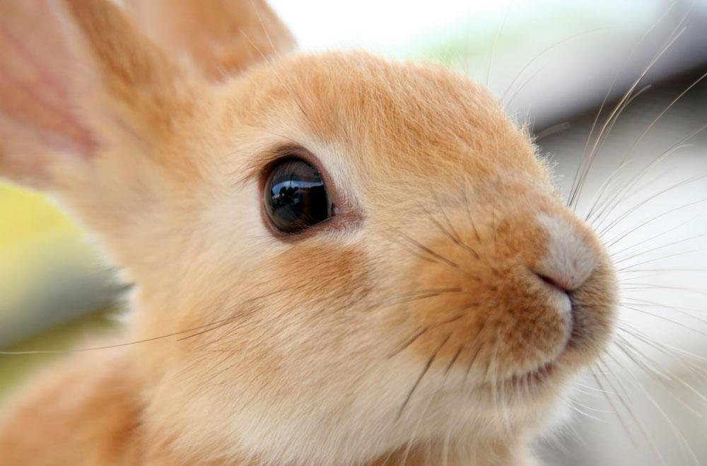 Why are all baby animals so cute?! This rabbit baby is the cutest.