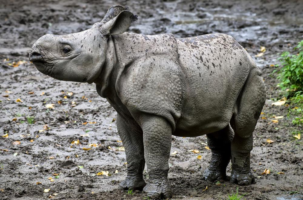 Why are all baby animals so cute?! This rhino baby is the cutest.