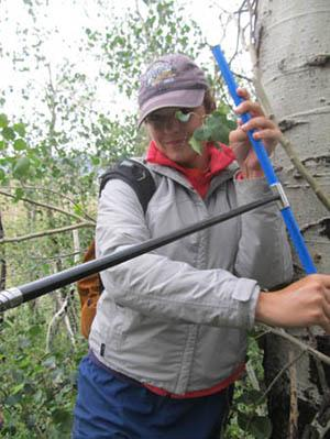 Tree coring in North Park: Carlye Schaeffer.