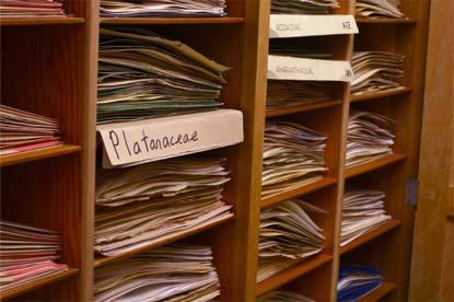UNC Herbarium shelves