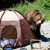 Bear and a tent