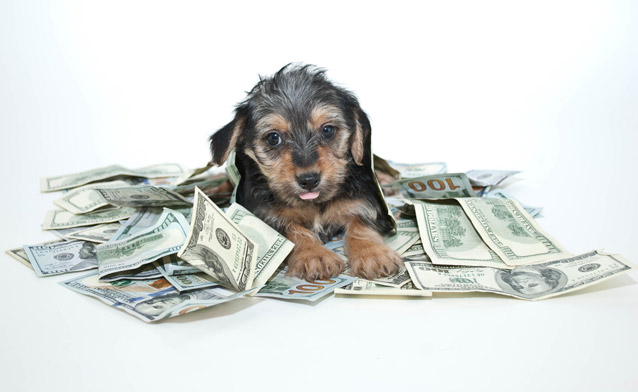 A dog covered in money of various notations.