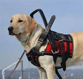Service dogs are working animals. You should not feed, pet, or play with a working service dog. If you distract a service dog, it may reduce his ability to perform his job fully.