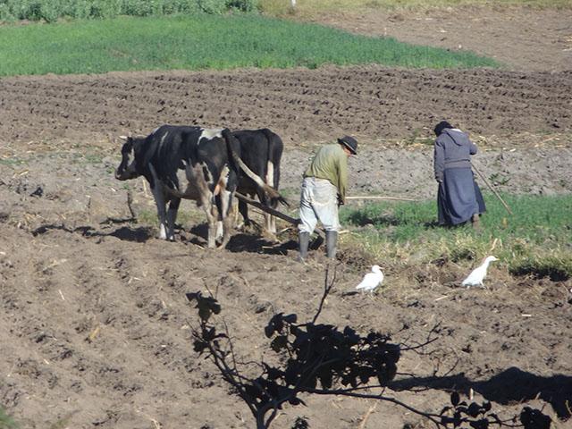 Agriculture Ecuador