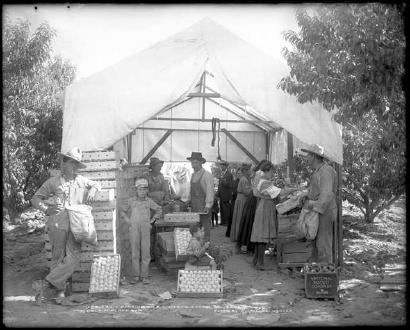 Packing Peaches Near Palisade