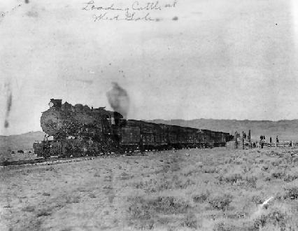 A Train Of Cattle Cars