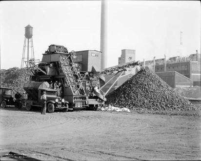 Unloading Sugar Beets In Brighton