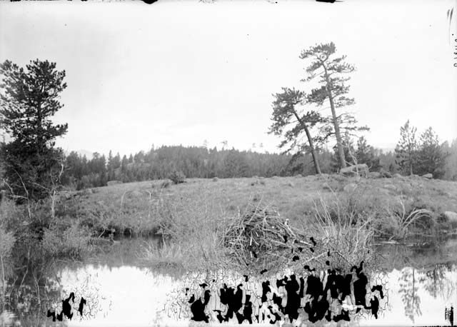 Beaver Pond And Lodge