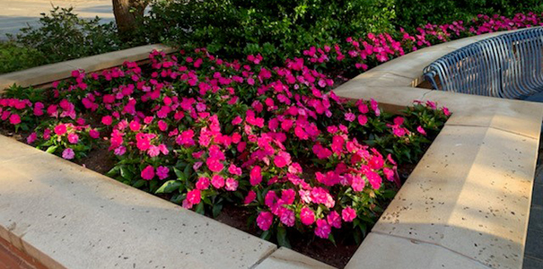 Adopt a Spot flower bed example