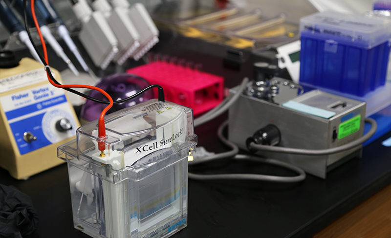"electrophoresis apparatus that will provide a ""molecular fingerprint"" of the venom."